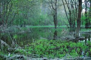 Morava's flooded forest