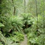 Evergreen Forest in India