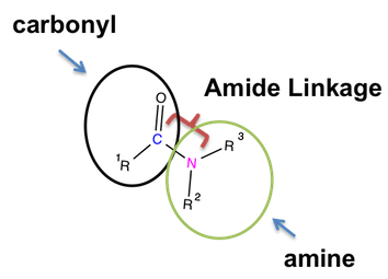 Structure of Amide