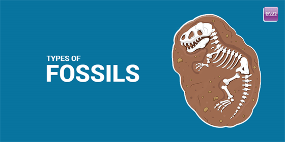 Types Of Fossils