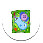 Structure of a Cell
