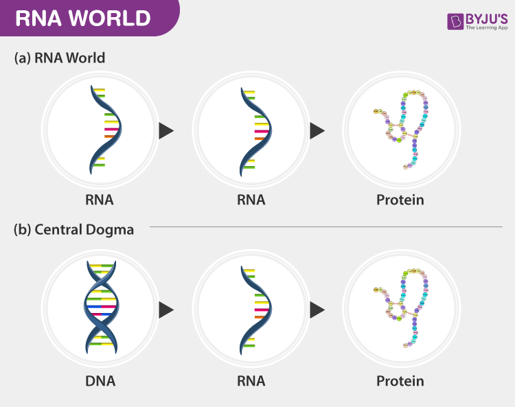 RNA World - The Genetic Material
