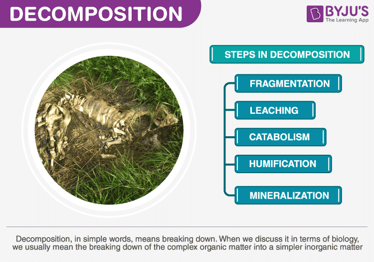 Process of Decomposition