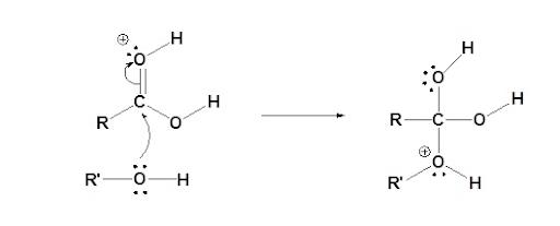 Fischer Esterification Mechanism Step 2