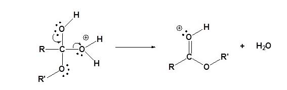 Fischer Esterification Mechanism Step 4