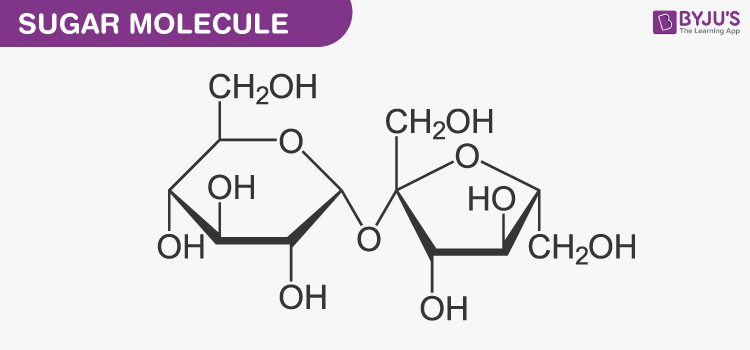 Nucleic acid and Sugar molecules
