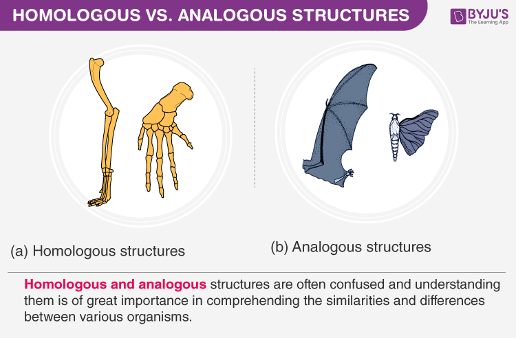 Difference Between Homologous And Analogous Structures