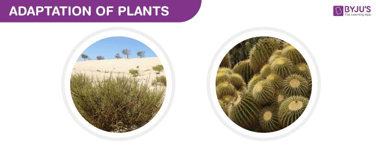 Adaptation of Plants