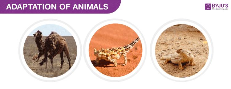 Adaptation of Animals