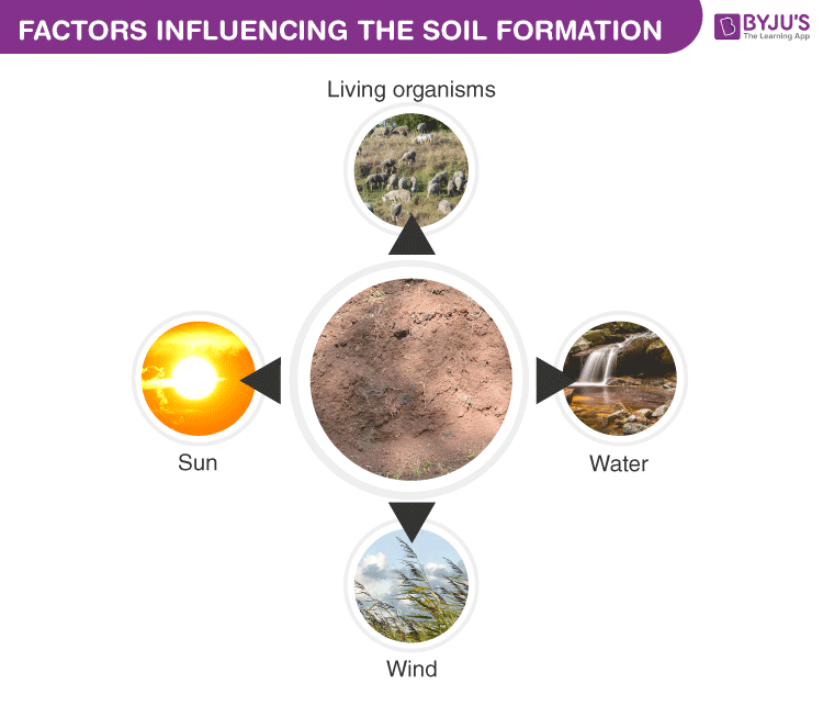 Factors Influencing the Soil Formation