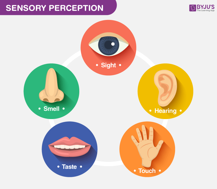 Sensory Perception An Introduction To The Process Of Perception