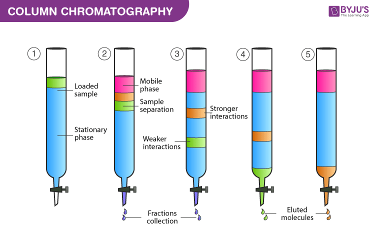 Diagram of Column Chromatography