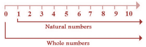 Natural Numbers and Whole Numbers Properties