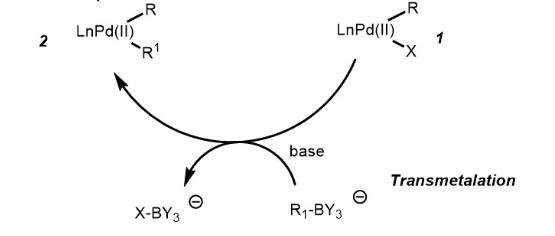 Suzuki Coupling Reaction Mechanism Step 2