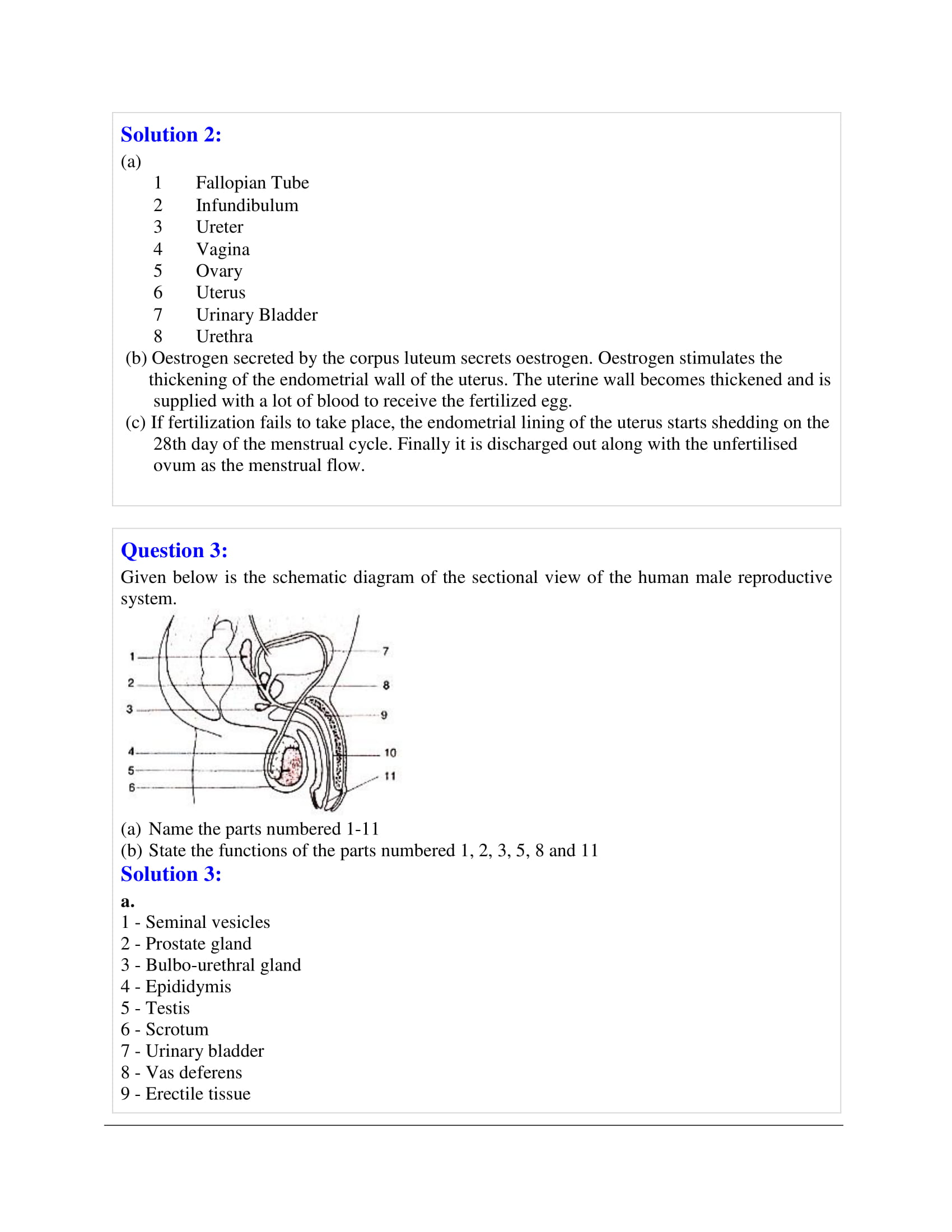 icse-selina-biology-solutions-class-10-chapter-10-the-reproductive-system-08