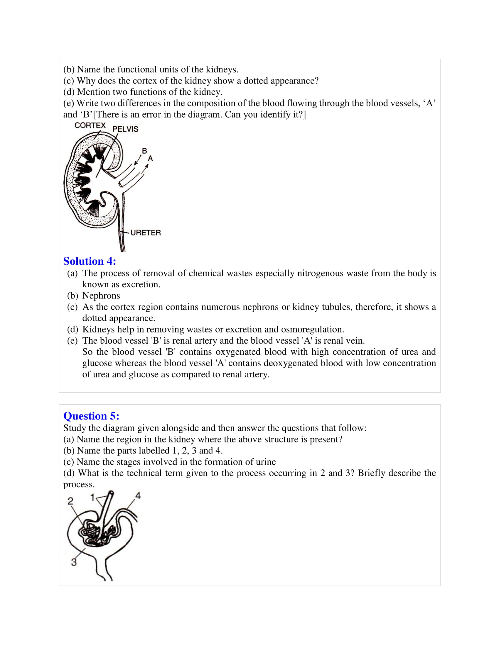 icse-selina-biology-solutions-class-10-chapter-7-the-excretory-system-10