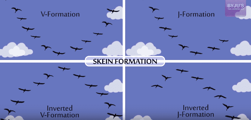 Skein Formation