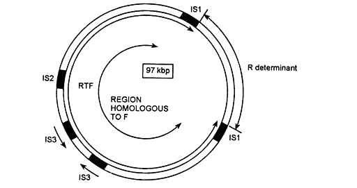 Structure of Resistance Plasmid