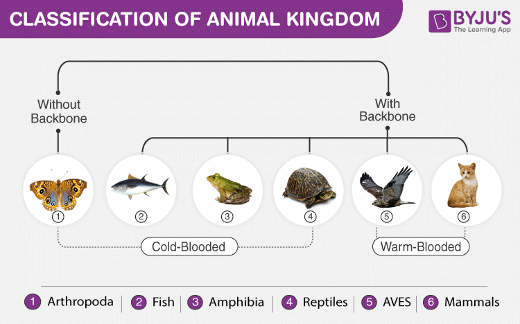Animal Kingdom - Biology
