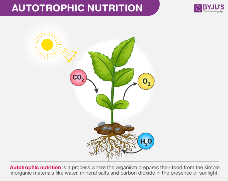 Autotrophic Nutrition