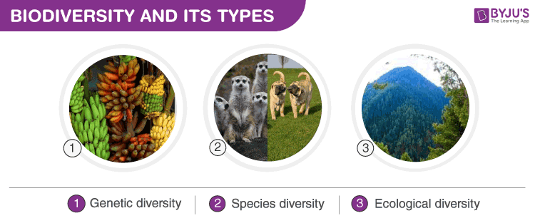 types of biodiversity