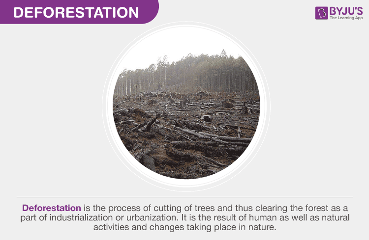 Deforestation - Causes And Consequences