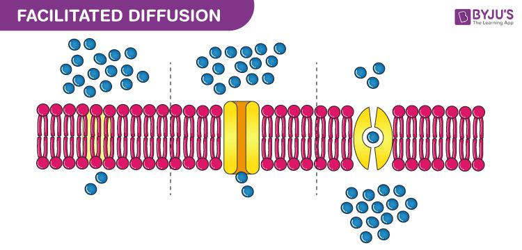 Facilitated diffusion