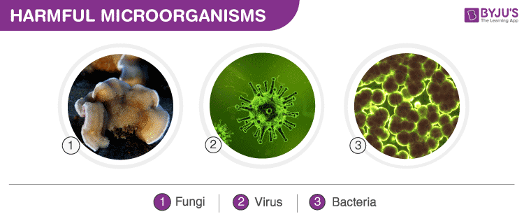Harmful Microorganisms - Types and Harmful Effects on Human Body