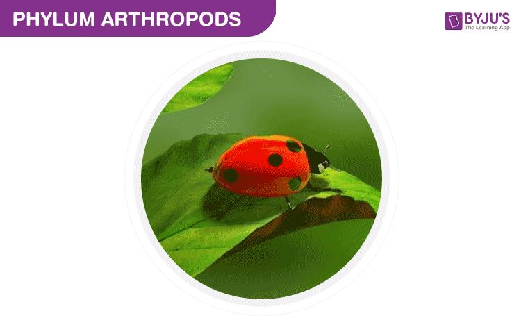 Phylum Arthropods