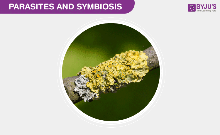 parasites and symbiosis