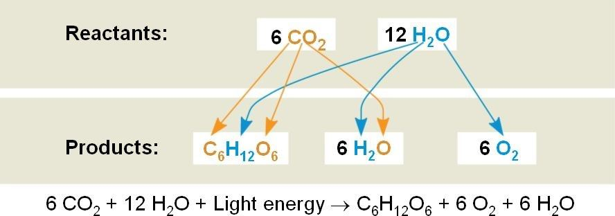 Uses of Redox Reaction in Photosynthesis