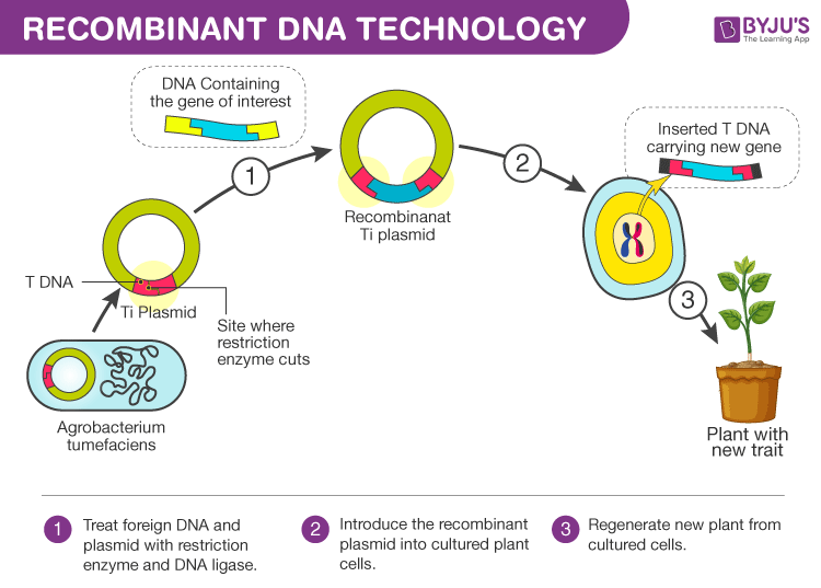 Recombinant DNA Technology - Tools, Process, and its