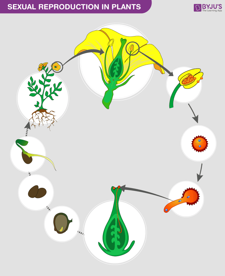 sexual reproduction in leaves