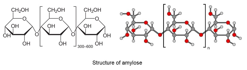 Amylose Structure