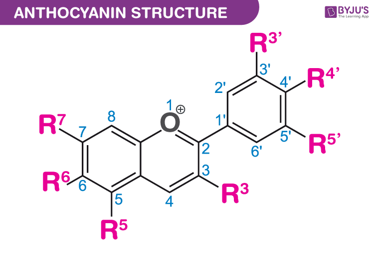 Basic structure of Anthocyanin