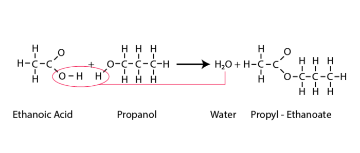 Carboxylic acid and alcohol