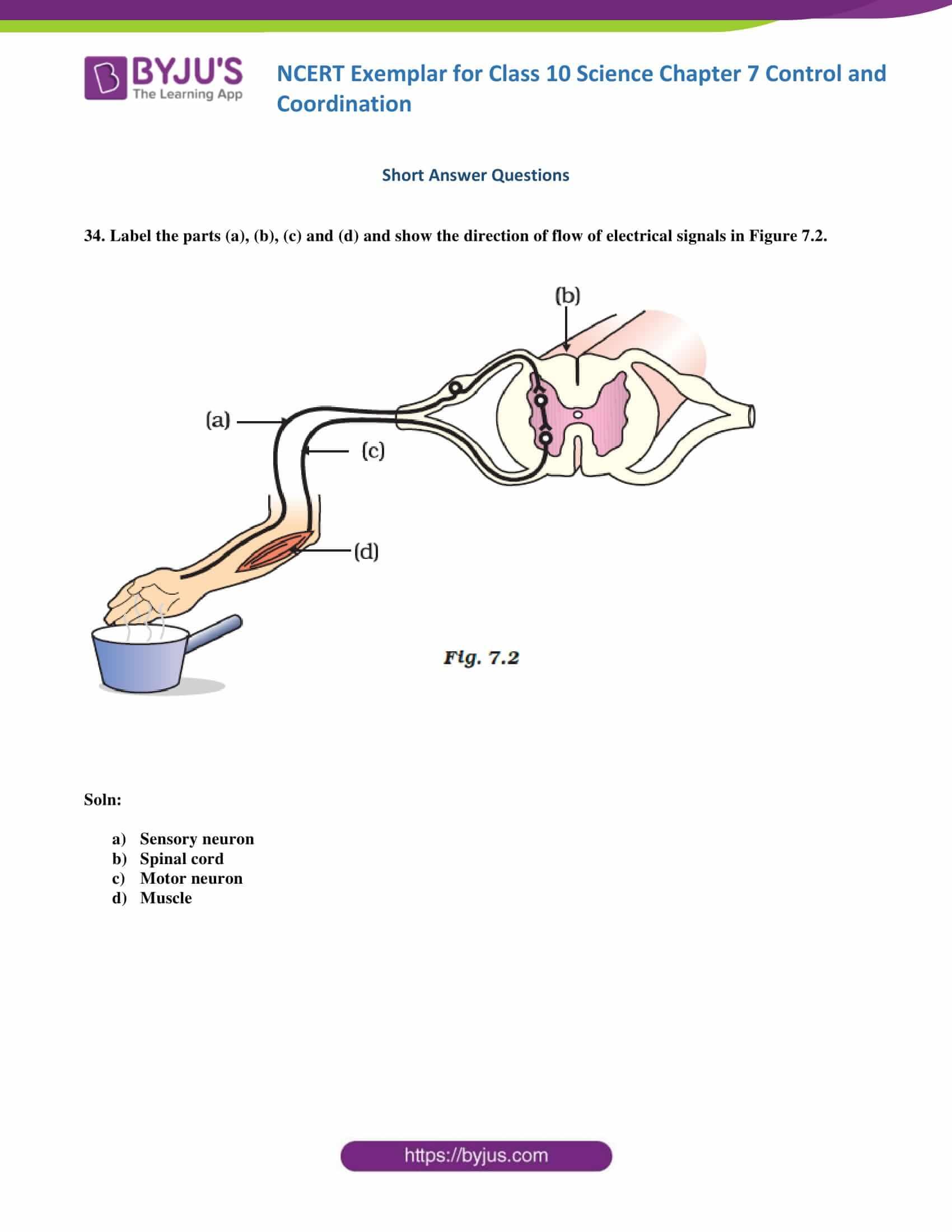 NCERT Exemplar solution class 10 Science Chapter 7 part 12