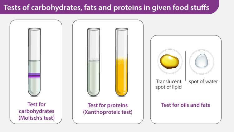Tests of Carbohydrates, Fats and Proteins in Given Food Stuffs
