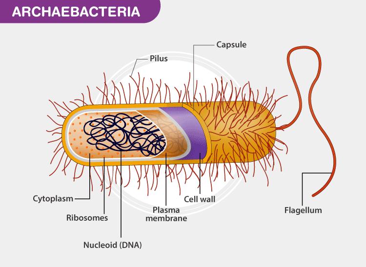 Archabacteria