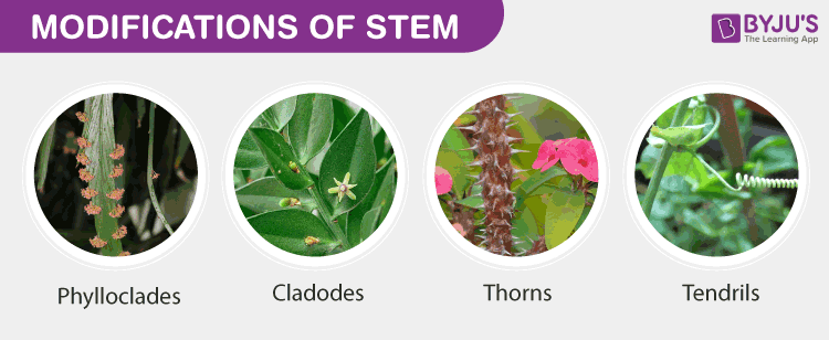 Modifications of Stem