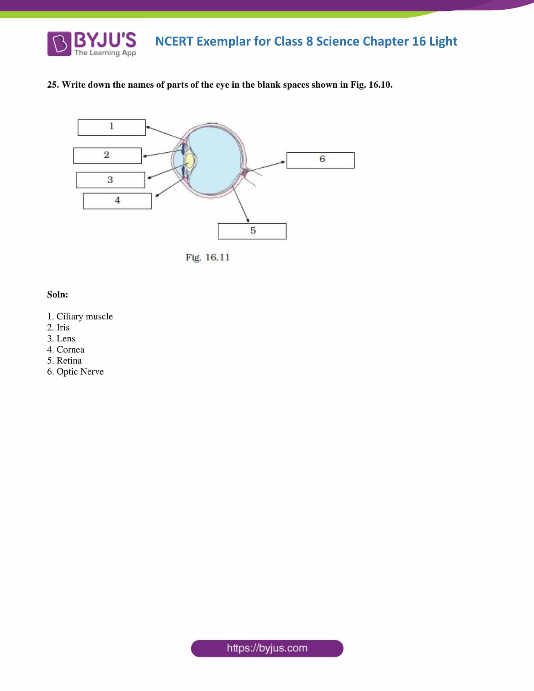 NCERT Exemplar solution class 8 science chapter 16 part 12