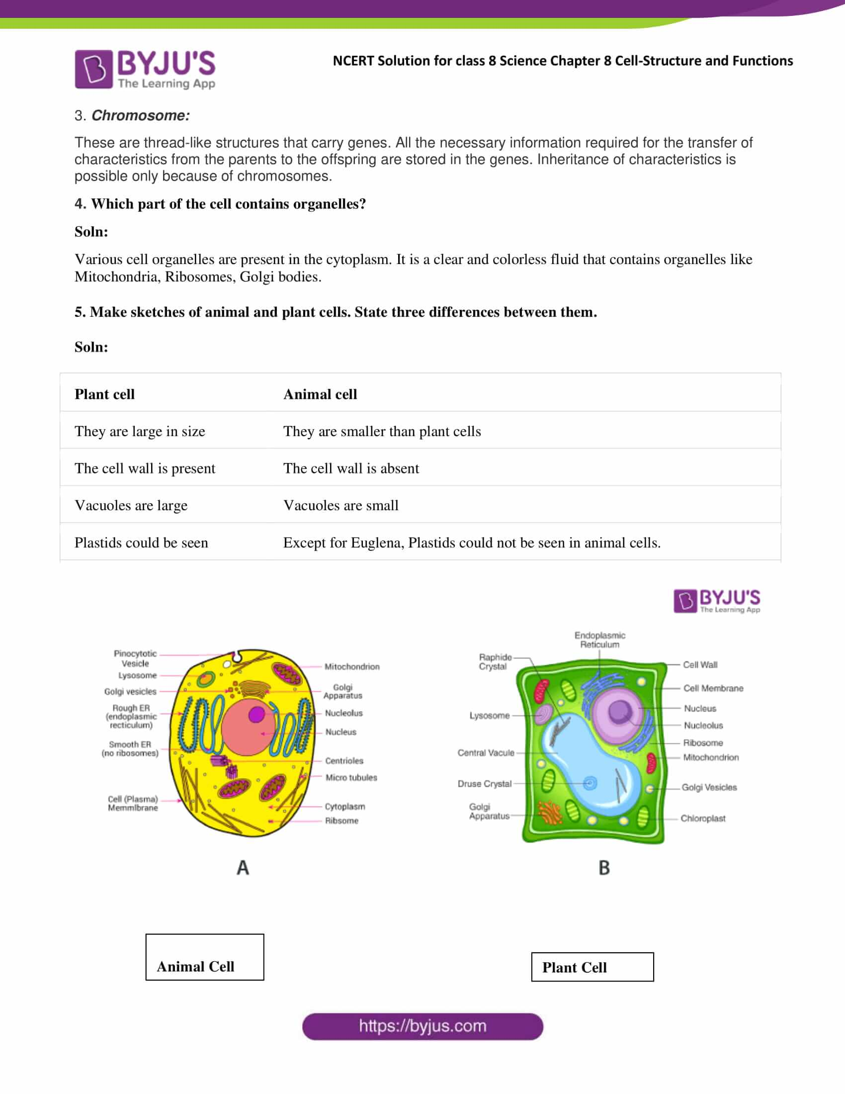 NCERT Solutions Class 8 Science Chapter 8 Cell Structure ...