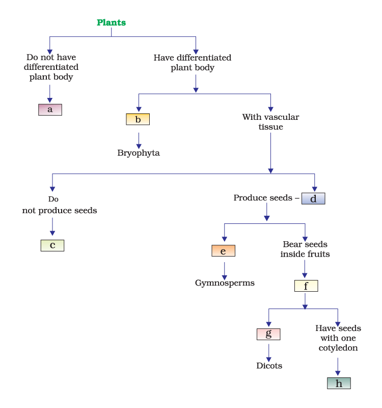 characteristics of plant