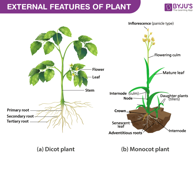 External features of plant