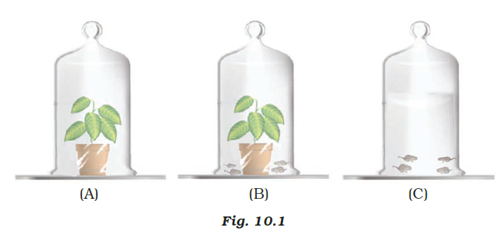 NCERT Exemplar Solutions Class 7 Science Chapter 10-sol-2