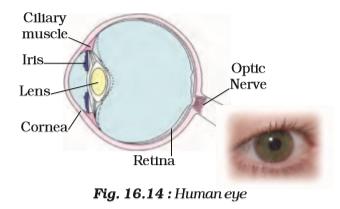 Strucrure of Human Eye