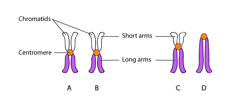 Structure of Centromeres