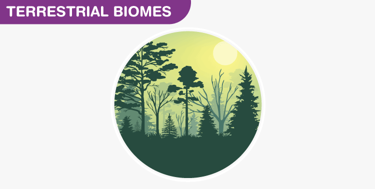 Terrestrial-biomes