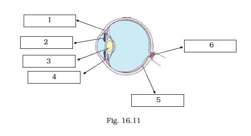 NCERT Exemplar Class 8 Science chapter 16 Solutions fig 16