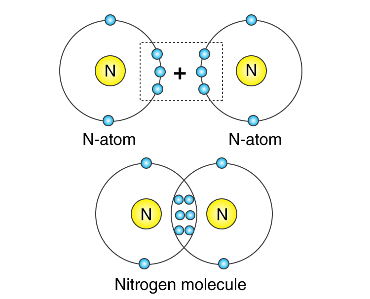orbital diagram of Nitrogen